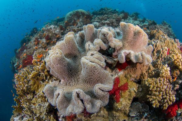 Kadavu Diving Charter Fiji