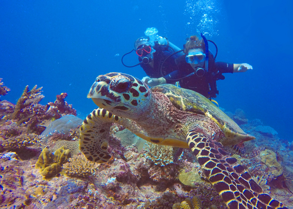 diving and freediving courses Fiji. SSI certified dive.