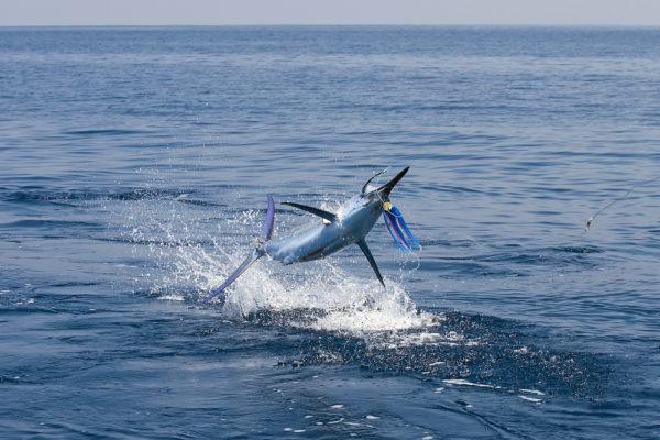 fiji-charter-gamefishing